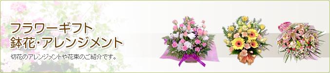 フラワーギフト・鉢花・アレンジメント